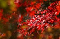Rolety na jesien